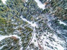 Flyg- snöig skog Arkivbild
