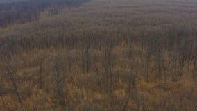 Flyg- surrfluga som skjutas över ekskogen lager videofilmer