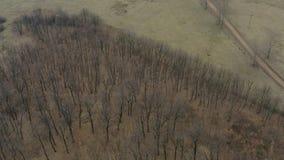 Flyg- surrfluga som skjutas över ekskogen