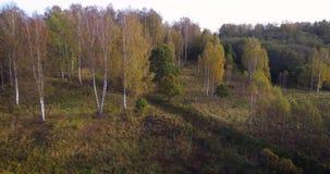 Flyg- surrlängd i fot räknatsikt: Flyg över höstbergby med skogar, fält och floden i mjukt ljus för soluppgång Carpathian Mo stock video