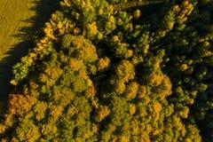 Flyg- surrsikt av höstskogen arkivbilder