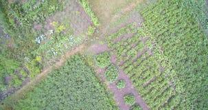 Flyg- surrsikt av landsträdgården med potatisar, Cherry And Cabbage arkivfilmer