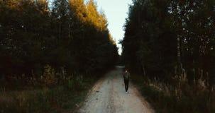 Flyg- surrsikt av vägen i träden för skoggräsplan i byn Det ryska landskapet med sörjer och gran, solig dag arkivfilmer