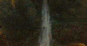 Flyg- surrsikt av vägen i träden för skoggräsplan i byn Det ryska landskapet med sörjer och gran, solig dag stock video