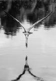 flyg v Fotografering för Bildbyråer