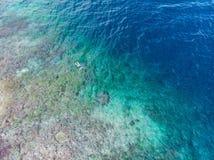 Flyg- ?verkant ner folk som snorklar p? det tropiska karibiska havet f?r korallrev, turkosbl?tt vatten Indonesien Wakatobi sk?rg? arkivfoto