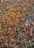 Flyg- vertikal sikt över personer som protesterar pro-catalonia och catalan kultur och språk i den spanska ön av Mallorca Royaltyfria Bilder