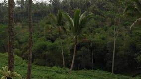 flyg- video för flyg 4K av balinesedjungeln i Ubud område Indonesien stock video