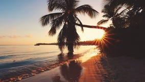 Flyg- videomaterial av den karibiska tropiska stranden med palmtr?d och vit sand Lopp och semester