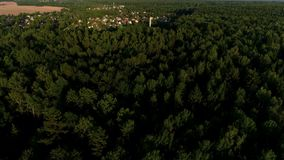 Flyga över а den härliga morgonskogen i strålarna av gryningsolen lager videofilmer