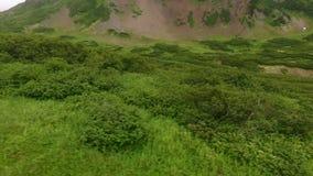 Flyga över de gröna träden och gräset dimma arkivfilmer