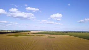 Flyga över den guld- videoen för vetefält arkivfilmer