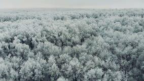 Flyga över djupfryst snöig gran och sörja träd lager videofilmer