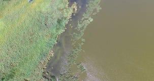 Flyga över flodbanken med vasser och högväxt gräs lager videofilmer