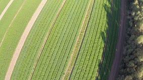 Flyga över jordbruksmark stock video