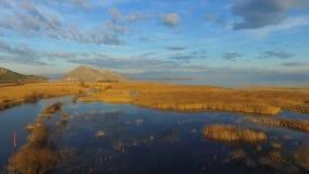 Flyga över Skadar sjön och det gula gräset arkivfilmer