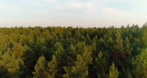 Flyga över skog