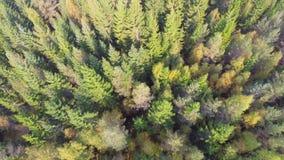 Flyga över skog stock video