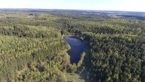 Flyga över skog arkivfilmer