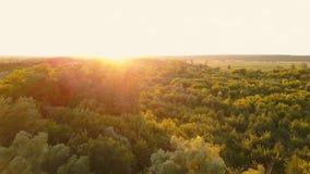 Flyga över träden på gryning - flyg- spela in på video