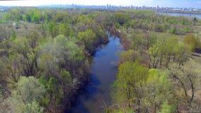 Flyga över vårträden stock video