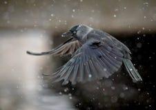 Flyga alikagalandet i tungt snöfall royaltyfri bild