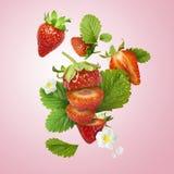 Flyga den nya smakliga mogna jordgubben med isolerade gräsplansidor Royaltyfria Bilder