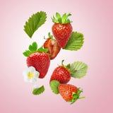 Flyga den nya smakliga mogna jordgubben med isolerade gräsplansidor Royaltyfri Foto