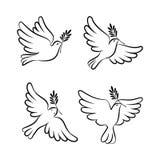 Flyga duvavektorn skissa uppsättningen Duva av fred Arkivbilder