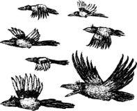 flyga för fåglar Arkivbilder