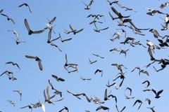 flyga för fåglar Arkivfoton