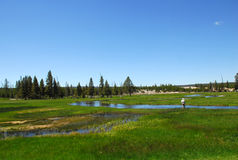 Flyga fiske i Yellowstone Arkivbild