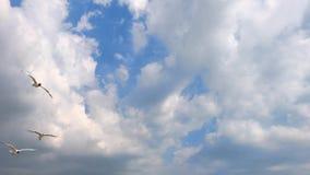 Flyga fiskmåsar för vitt hav högt i himlen mot en bakgrund av moln, sommardag arkivfilmer