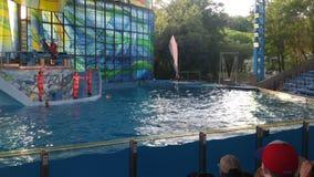 Flyga flasknäsdelfin på vattenshowen Arkivbild