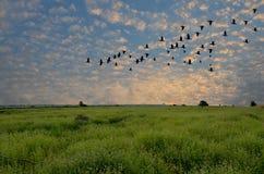 Flyga flocken av fågeln, i att glittra morgonljus Arkivfoto