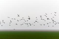 Flyga flocken av fåglar Royaltyfri Fotografi