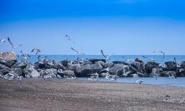 Flyga flocken av seagulls Lake Michigan royaltyfria foton