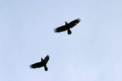 flyga för fåglar Arkivbild