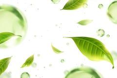 Flyga grön tebladbakgrund vektor illustrationer