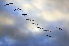 Flyga gruppen av seagulls Arkivbild
