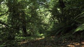 Flyga i den tropiska rainforesten Georgia arkivfilmer