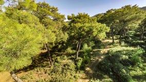 Flyga i skogen över gläntan i en sommardag Antenn 4k lager videofilmer