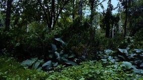 Flyga i skogen ovanför jordningen stock video