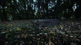 Flyga i skogen ovanför jordningen arkivfilmer