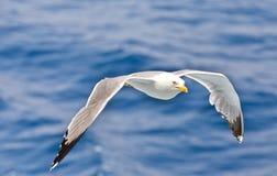 Flyga i vågorna Royaltyfria Bilder