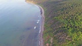 Flyga längs stranden stock video