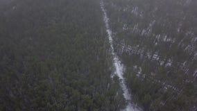 Flyga med surret över en snöig skog stock video