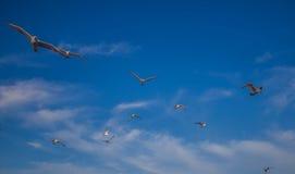Flyga med ut gränser Arkivfoton