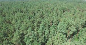 Flyga ovanför den gröna barrskogen