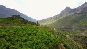 Flyga ovanför frodigt landskap och berg på Gran Canaria stock video